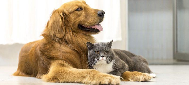 Wat gebeurt er met de hond na de scheiding?